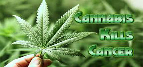 Cannabis Kill Cancer Cells