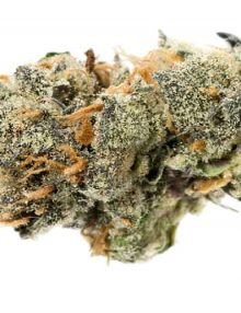 Cannabis Platinum GSC Indica Dominant Hybrid AAAA